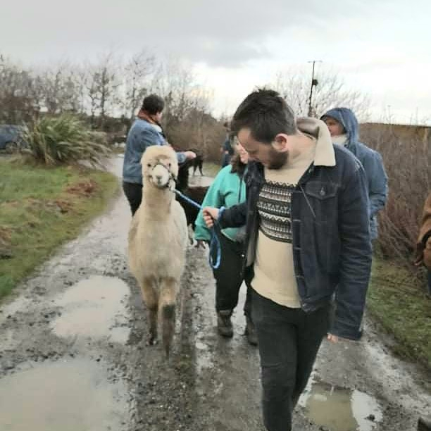 The Student Explorer walking an alpaca on a leash.