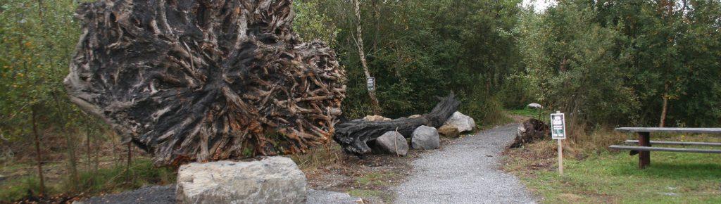 The Celtic Knot- Padraig Larkin- Irish bogs